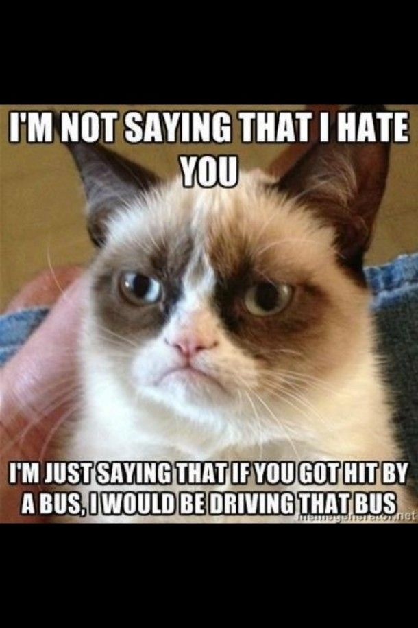 966 best images about Sarcastic 'Grumpy Cat' on Pinterest Loathe Cat