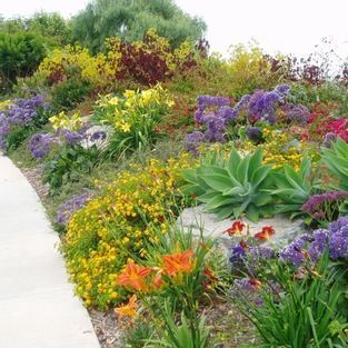 Drought Tolerant Flower Garden Plans | Drought Tolerant Garden Design  Ideas, Pictures, Remodel And