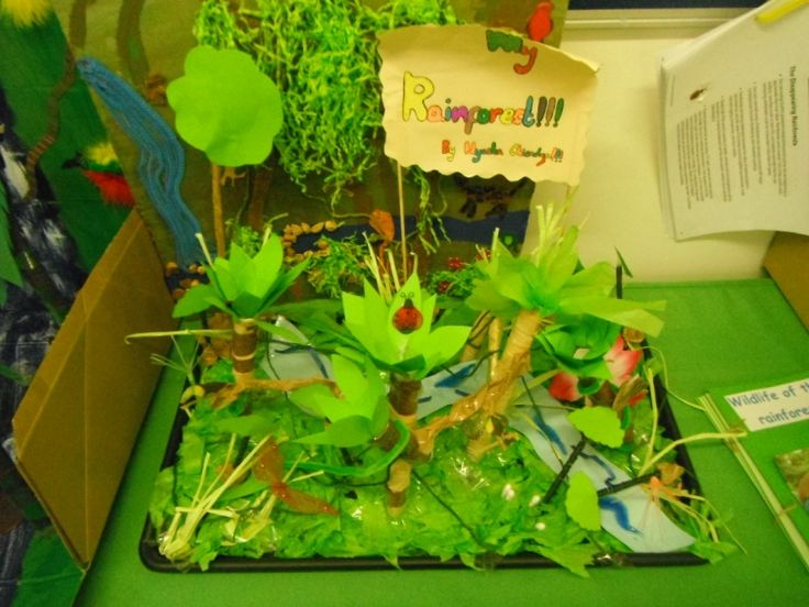 Classroom Rainforest Ideas ~ Map of tropical rain forest for kids these are some