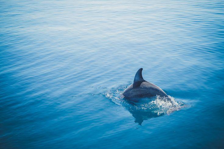 An der wunderschönen Küste von Kenia kann man nicht nur baden, sondern natürlich auch tauchen und schnorcheln. Pilli Pipa bietet Schnorchel-Ganztagsausflüge im Kisite Mpunguti Marine Park & Res…