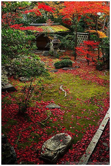 The end of autumn in Daiho-in temple (大法院), Kyoto, Japan