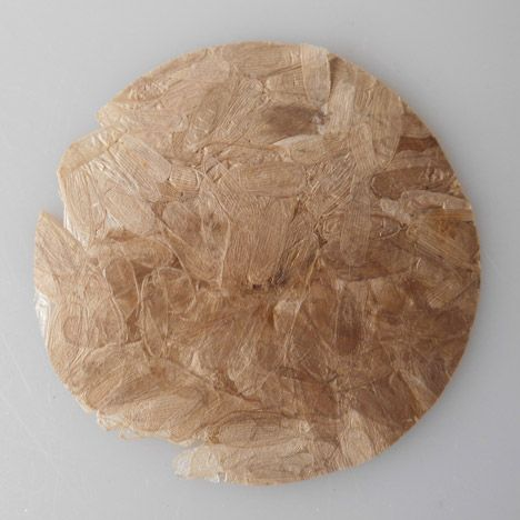 A bioplastic called Coleoptera that is produced from the pressed shells of dead darkling beetles! a project by Hoekstra