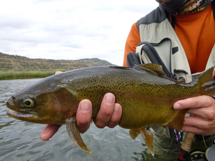 San juan 39 s slamming blogs fish enchantment nm 39 s for Fishing new mexico