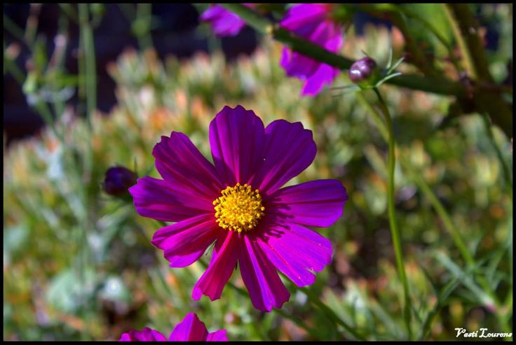 A flower from Oudtshoorn. Flowers  Nature Shoots