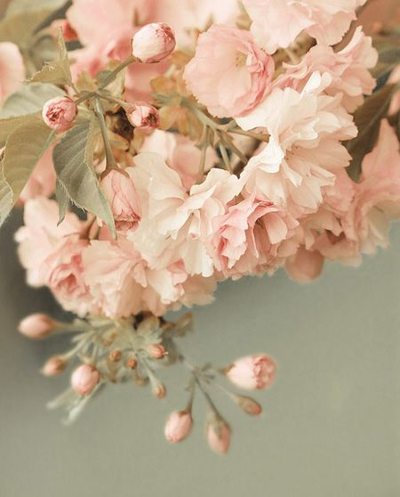 Spring Blossoms   from The Paris Apartment Blog   House & Home
