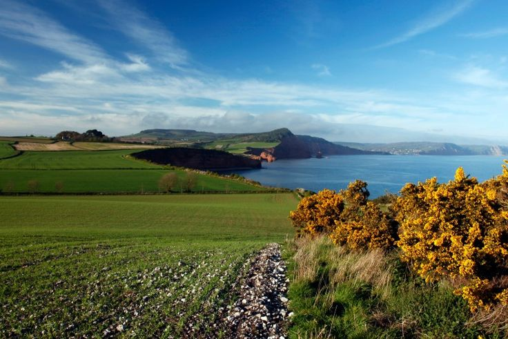 The south west coast path in  Sidmouth, Devon