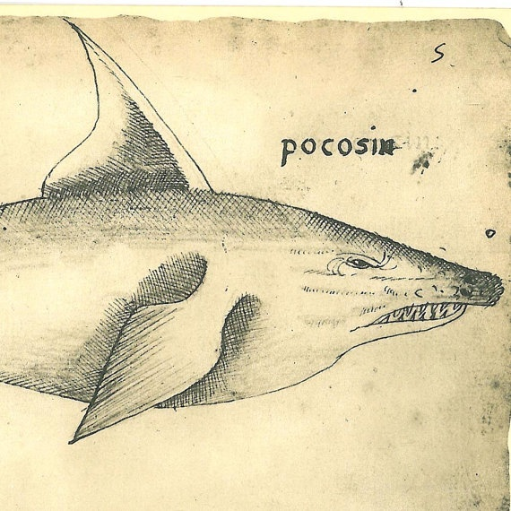 Vintage  Print Fishes and  Dolphin Maranhao Brazil by carambas,