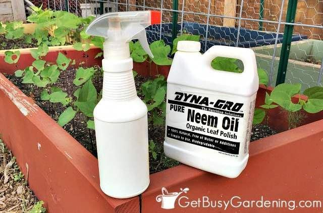 Natural Garden Pest Control Remedies And Recipes Pest Control