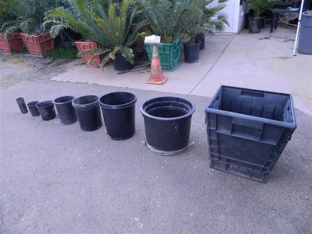 Plant Pot Sizes Container Plants Container Size Plants