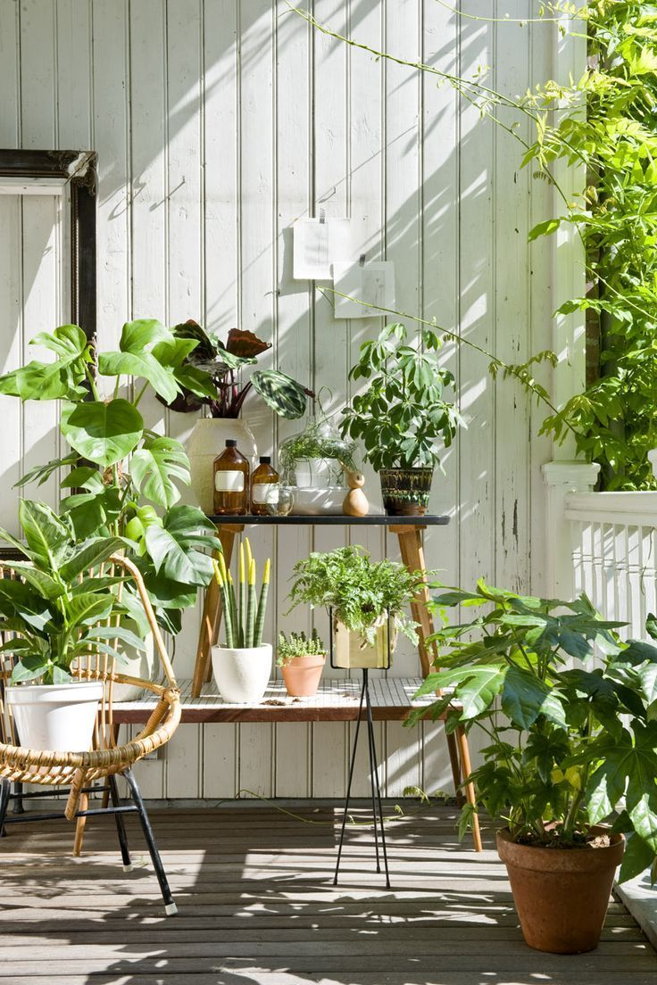 Blog-Bettina-Holst-Plants-ideas-2.jpg 736×1,104 pixels