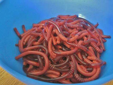 Eklig? Toll! Kinder werden diese Götterspeisenwürmer lieben.