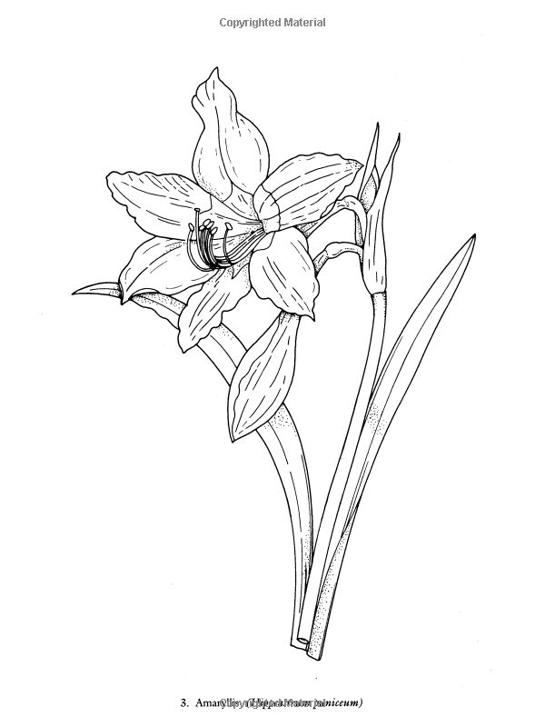 Redouté Flowers Coloring Book (Dover Nature Coloring Book
