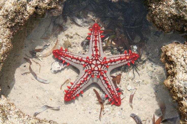 The stars of Watamu