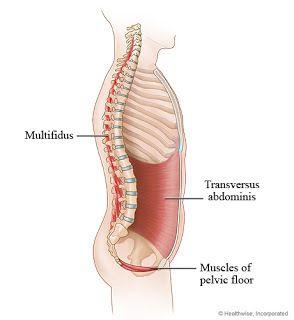Transversus Abdominis - coreträning - Hälsa som livsstil