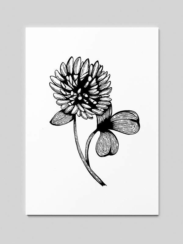 Clover Woodcut Sketches / Drawings