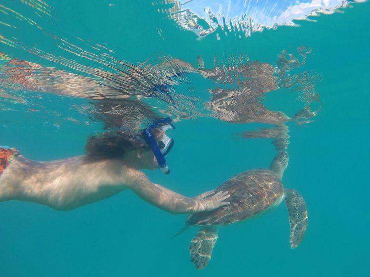Treffeillä merikilpikonnien kanssa  Luonto- ja ryhmämatkoja ei pitäisi koskaan, ikinä eikä milloinkaan yhdistää.  http://www.exploras.net/matkablogi/barbadoksen-merikilpikonnat