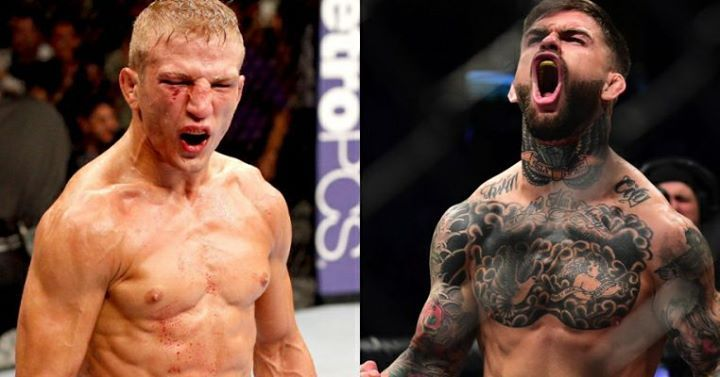 """Team Alpha Male head coach Justin Buchholz (via Matt Serra's UFC Unfiltered Podcast/ transcribed by fansided.com).....  """"Cody tweeted 'If you wanna talk about sparring, why don't you talk about the time I knocked you out?' And then from there, T.J. was like 'no that's not true, you didn't knock me out.'""""  Matt Serra: """"I seen it. I wasn't going to say anything, but you did show it to me."""" #UFC213 #mma #ufc"""