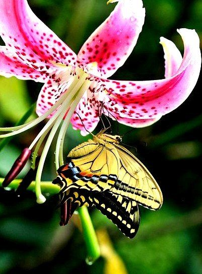 #flowers #luxurioushair #tropic #life