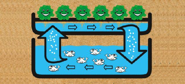 L'aquaponie expliqué sur Goodnesstv !