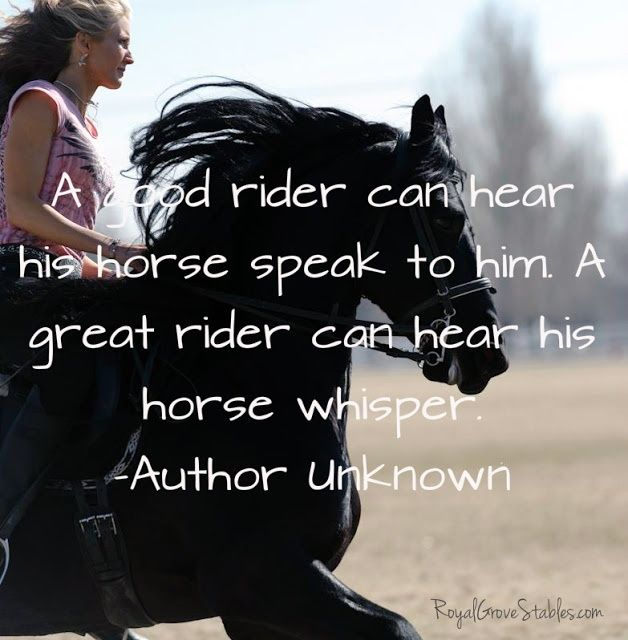 Horses Quotes   Horses Sayings   Horses Picture Quotes