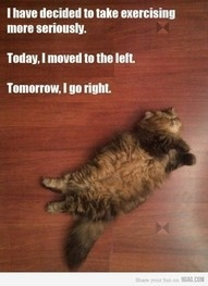 Oh fat yees :): Sunday Brunch, Exerci Plans, Funny, Workout Plans, Fat Cat, Weightloss, Weights Loss, Exerci Routines, New Years