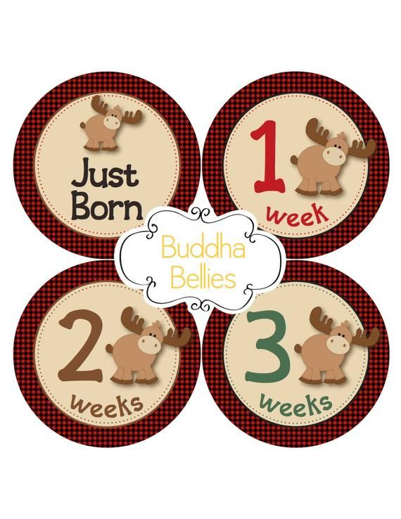 Plaid Moose Stickers Set of 20