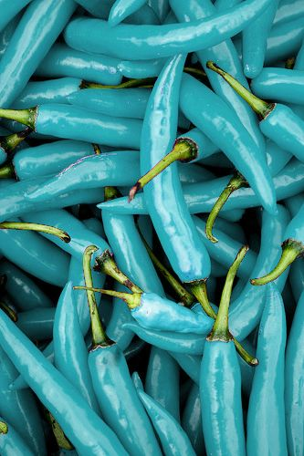 Color - Aqua, Teal, Turquoise: Piments Bleu Turquoise #patternpod #beautifulcolor #inspiredbycolor
