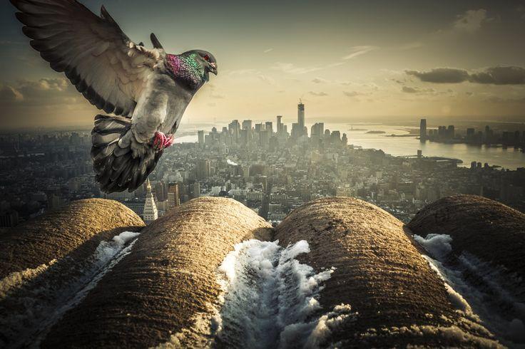 """500px / Photo """"I love NY! """" by Frank Hazebroek"""