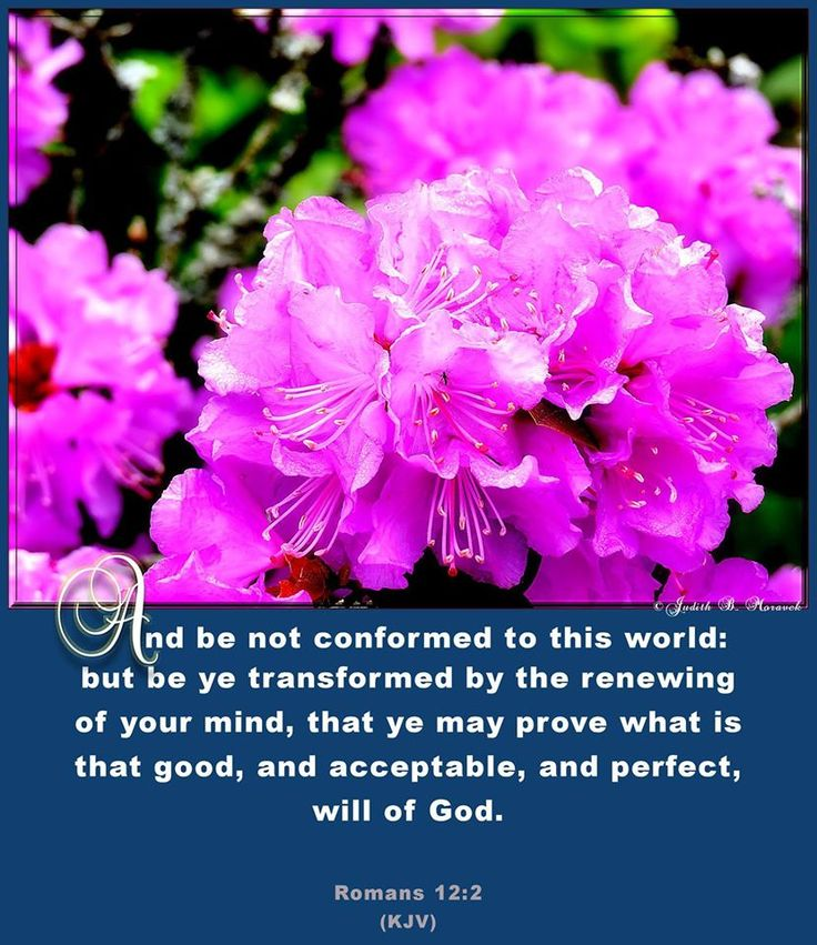 Therefore, I urge you brother's and sister's, in view of God's Mercy, to offer your bodies as a living sacrifice, Holy and Pleasing to God ---This is your true and proper worship. DO NOT CONFORM to the pattern of this world, but be TRANSFORMED BY THE RENEWING OF YOUR MIND. Then you will be able to TEST and APPROVE what GOD'S WILL IS ----HIS Good, pleasing and Perfect Will. ~~~ Put away all the Pornography, Lust of the Flesh, Woman dress appropriately as not to cause a Brother to stumble!