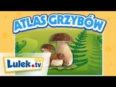 Atlas grzybów dla dzieci Lulek.tv - YouTube