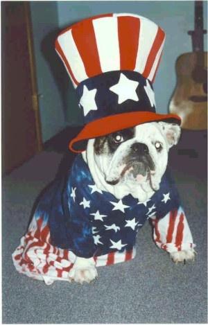 Proud to be an American English Bulldog