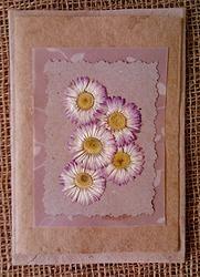 English Daisy - Greeting Card