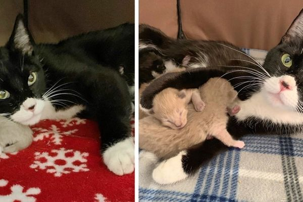 Stray Cat Came To Family For Help When Rescue Arrived They Found Kitten By Her Side Stray Cat Cats Kitten Rescue