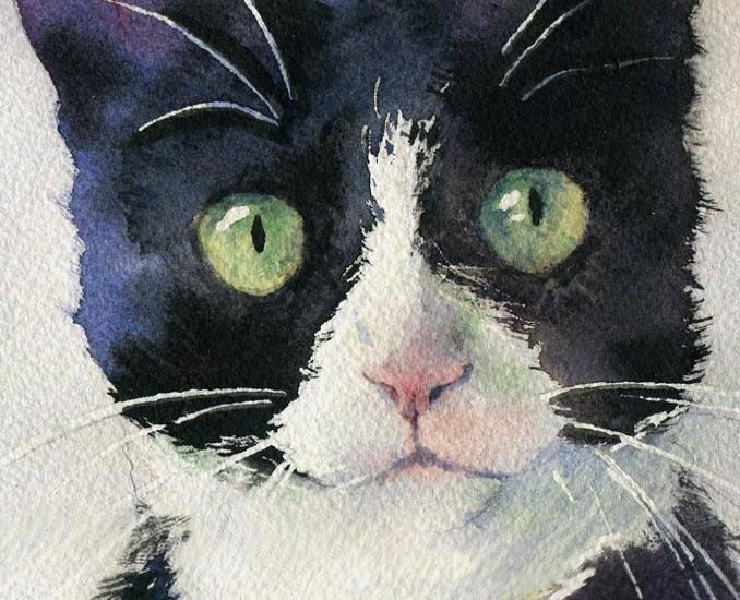 Rachel Peterson http://rachelsstudio.blogspot.com/2010/12/tuxedo-and-friend-watercolor-painting.html