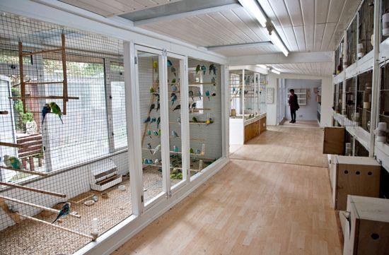 AWB Budgies Aviary : My Challenge: February 2011