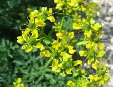 17 Best images about Plantas medicinales on Pinterest