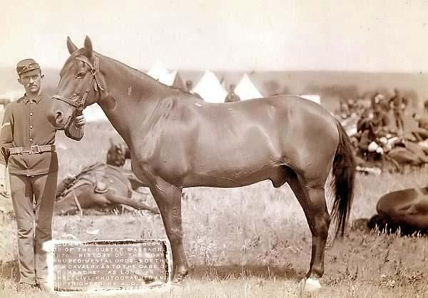 Comanche, the only US Army survivor from the battle of Little Big Horn. His DOB and ancestry were unknown.