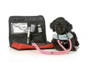Stocking a Pet First Aid Kit and Poison Prevention Tips from Pet Poison Helpline | FIDO Friendly