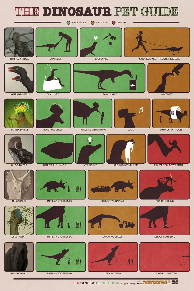 Pet guide shows what could happen if you actually had a dinosaur.