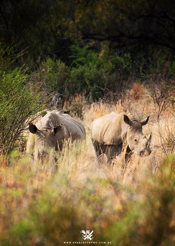 South Africa : safari!
