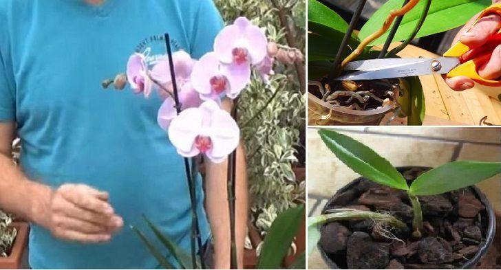L'orchidea è uno tra i fiori più belli e delicati che esiste al mondo, per cui richiede una grande cura costante. Simbolo di classe, amore ed eleganza, l'orchidea, richiede trattamenti specifici soprattutto durante il periodo molto particolare di rifioritura: nonostante, in natura, esistono molte varietà di questo fiore speciale, i segreti, di seguito elencati, valgono …