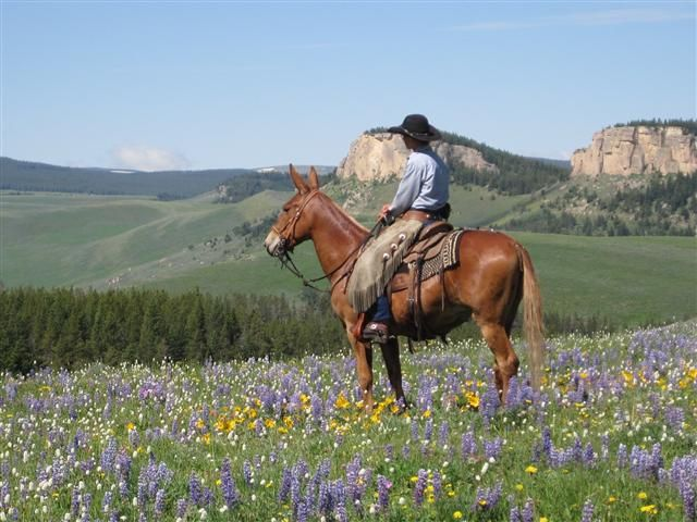 15 Best Mules Images On Pinterest Gov T Mule Horses And