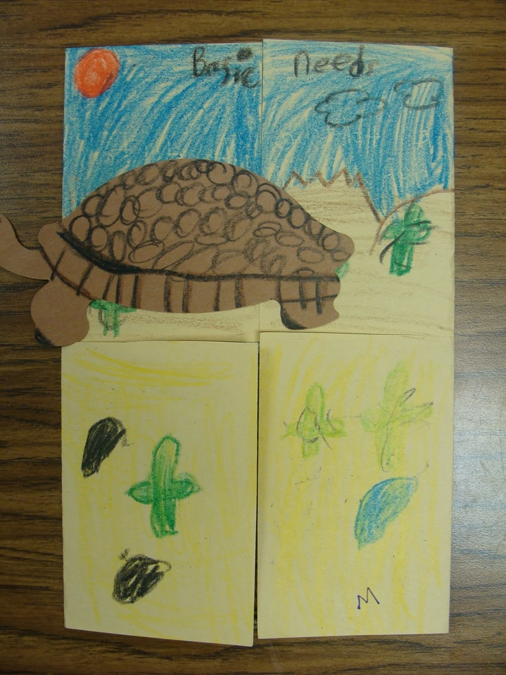 This is a Food, Water, Shelter, Space flipbook that students could make for any animal.  This helps students think about the basic needs of animals and how each animal has unique needs including their habitat.