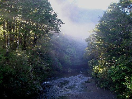 Kaitoke Regional Park, home of the elves of Rivendell!