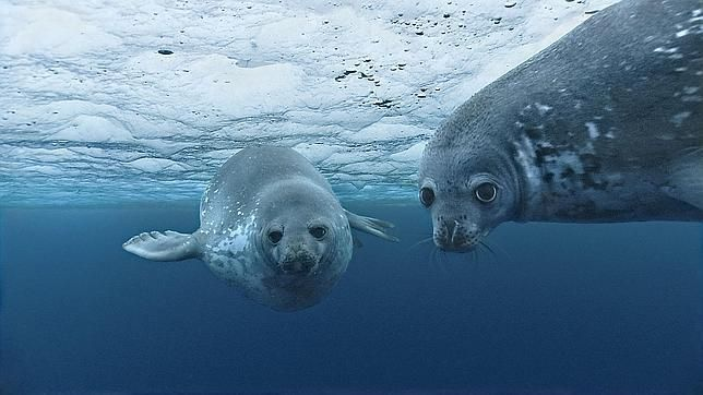 Navegando entre muchas aguas: realiza este examen sobre los 5 océanos del mundo