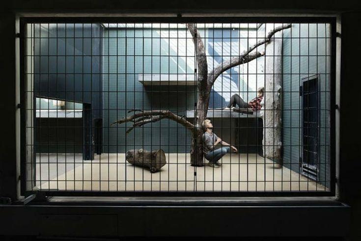 The Human Zoo Series – Fubiz Media