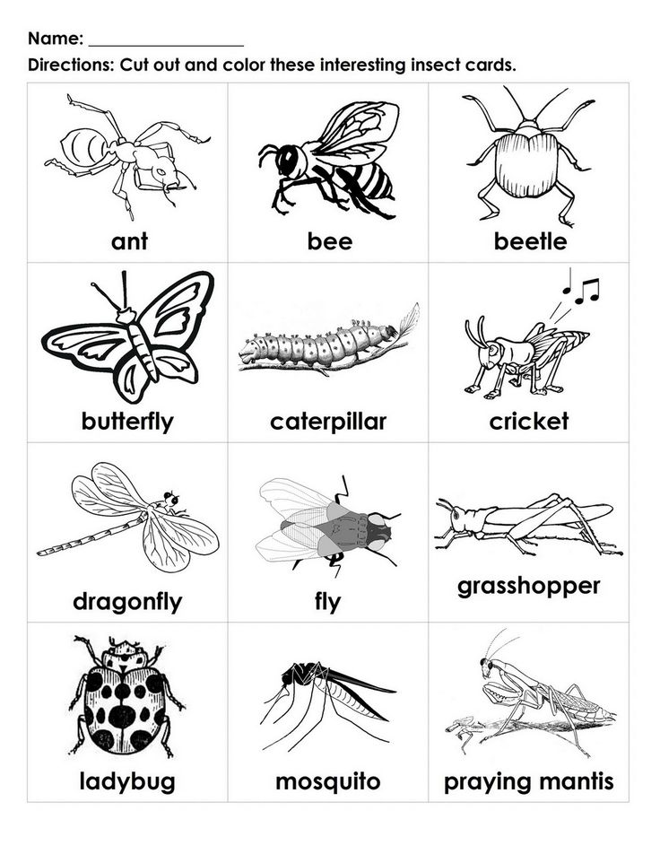 bugs for kids to color   ... Interesting Insects black-white cards student-handout   ESL For Kids