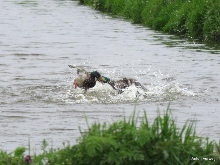 Watergevecht ... http://godisindestilte.blogspot.nl/2015/04/watergevecht.html