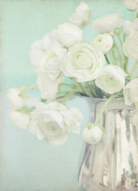 ~ White Ranunculus ~