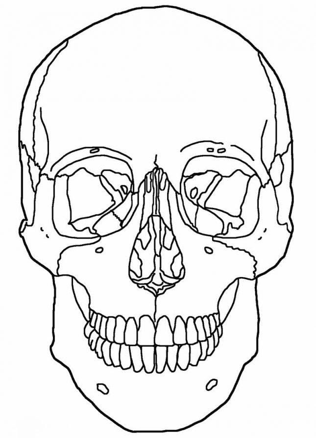 12 Halloween Coloring Page Printables To Keep Kids And Adults Busy Skull Coloring Pages Anatomy Coloring Book Halloween Coloring Pages